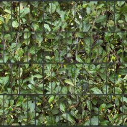Sichtschutz für Doppelstabmattenzaun Kirschlorbeer klein
